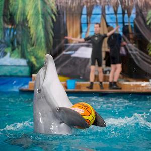 Дельфинарии, океанариумы Шелехова