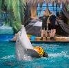 Дельфинарии, океанариумы в Шелехове
